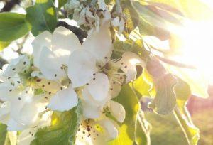 Boekhouder ZZP geeft 4 bloemboeketten van 'Maravilha'weg aan Twitter-Facebook-volgers